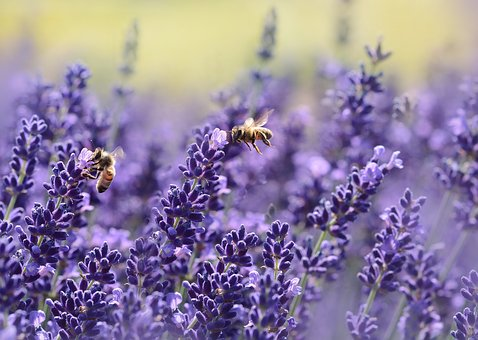 HOW TO GET RID OF STRESS IN A NATUROPATHIC WAY- 2nd PART, FOODS AND AROMATHERAPY